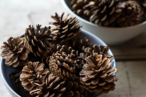Pine Cone Collecting for Winter Projects: Make it a Challenge from make-it-your-own.com (Art, Crafts & activities for kids)