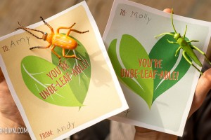Bug Pin Printable Valentine's Day Cards with make-it-your-own.com (Creative activities for kids)